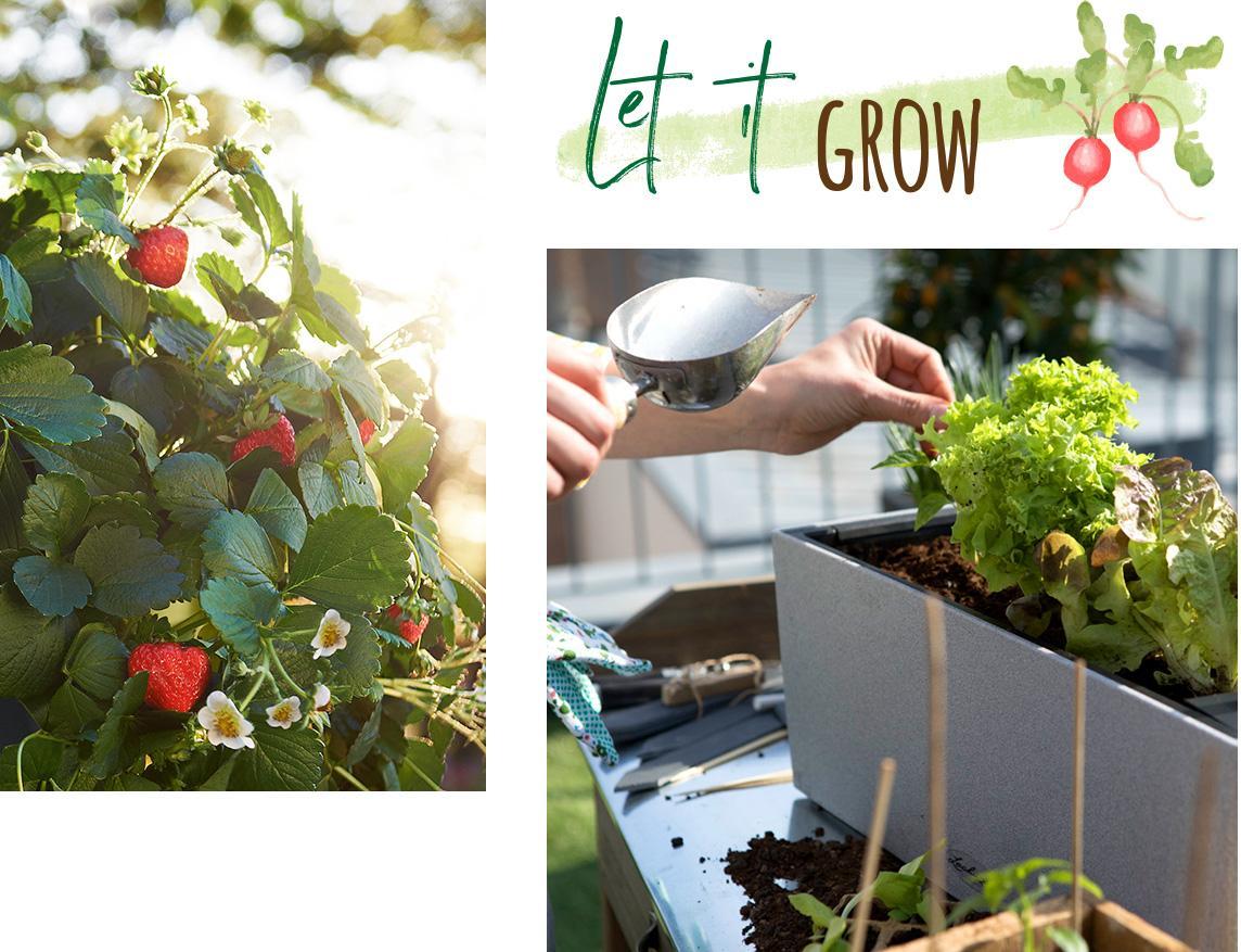 Les délices du jardinage amateur