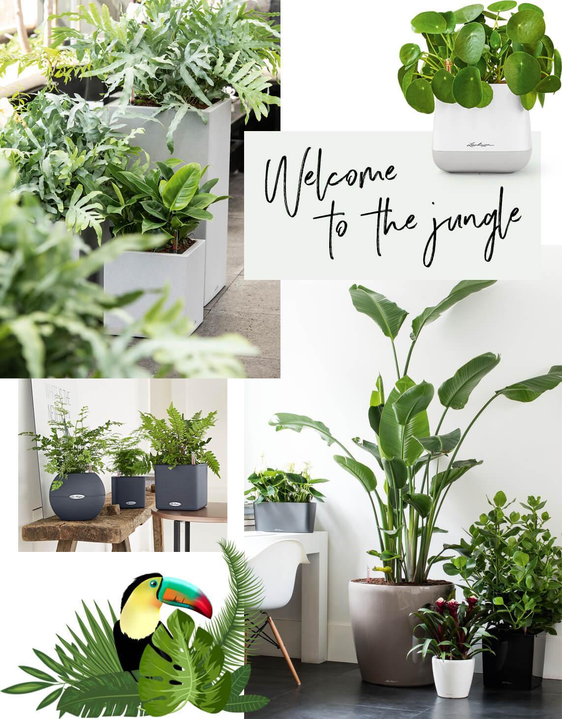 Urban Indoor Jungle