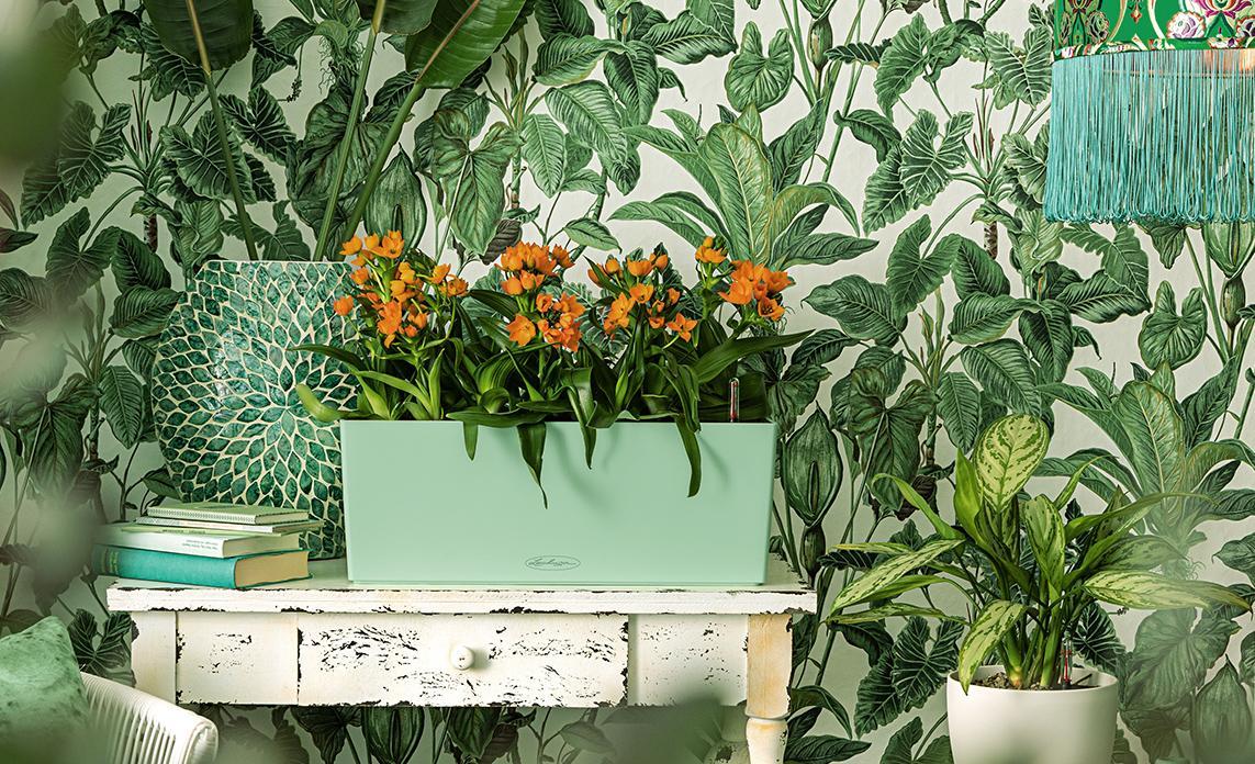 LECHUZA Balconera Color in der Sonderfarbe mint bepflanzt mit orangefarbenem Milchstern