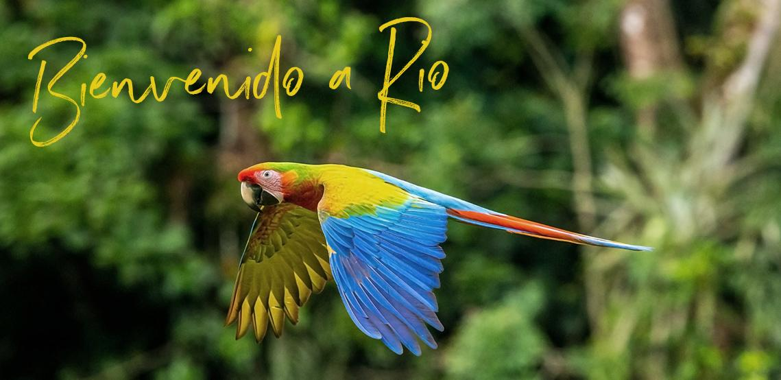 Un guacamayo rojo brillante vuela por la jungla