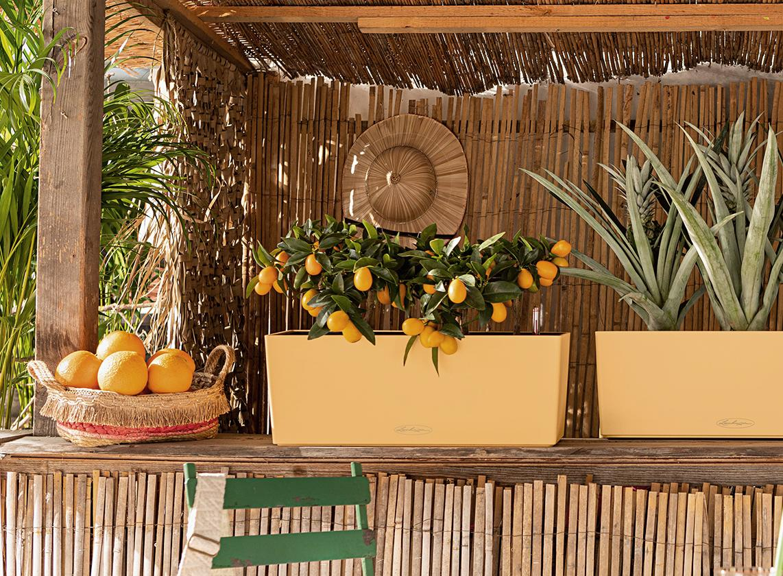 'Zwei LECHUZA BALCONERA Color in der Sonderfarbe peach stehen auf der Theke einer Strandbar