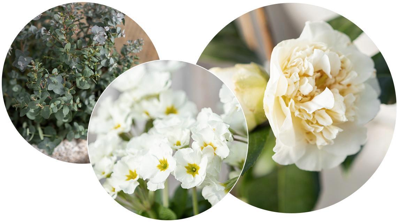 'Verschiedene weiße und grüne Pflanzen und Blüten in Kreisen angeordnet (von links nach rechts: Eukalyptus