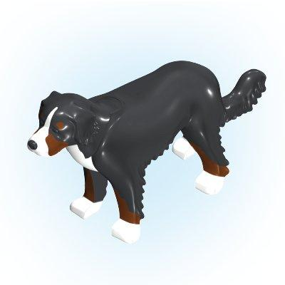 30667452_sparepart/Sennenhund stehend