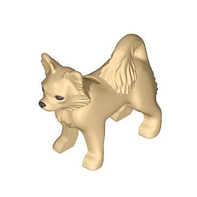 30678082_sparepart/Chihuahua