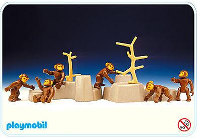 3496-A 6 chimpanzés / arbre / rocher
