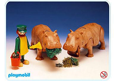 3547-A 2 Flußpferde/Tierpfleger