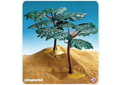 3548-A deux acacias