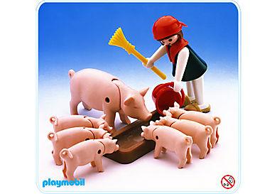 3566-A fille/porc/porcelets