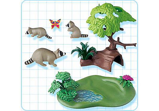 4205-A Famille de ratons laveurs detail image 2