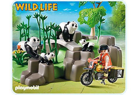 5414-A Pandafamilie im Bambuswald detail image 1