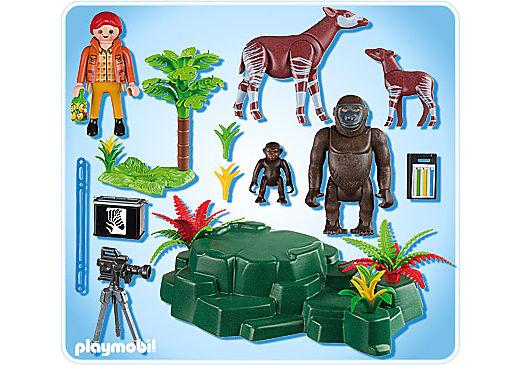 5415-A Okapis am Gorilla-Felsen detail image 2