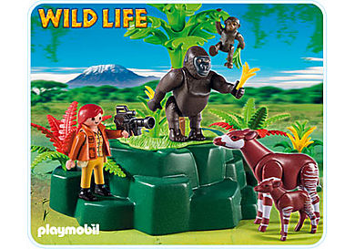 5415-A Okapis am Gorilla-Felsen