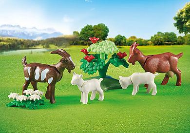 6315 Famille de chèvres