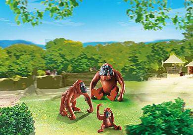 6648 Orangutan Family
