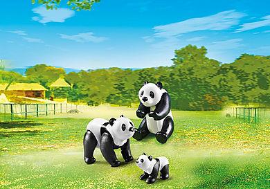 6652 Panda Family