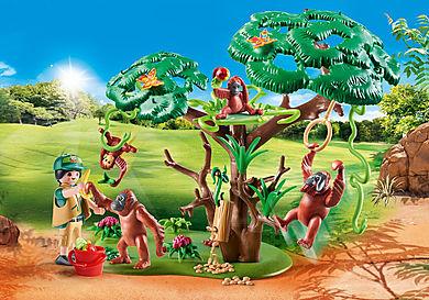 70345 Orangs outans  avec grand arbre