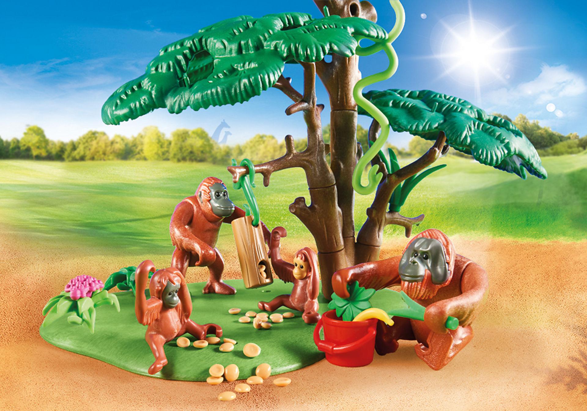 70345 Orangs outans  avec grand arbre  zoom image4
