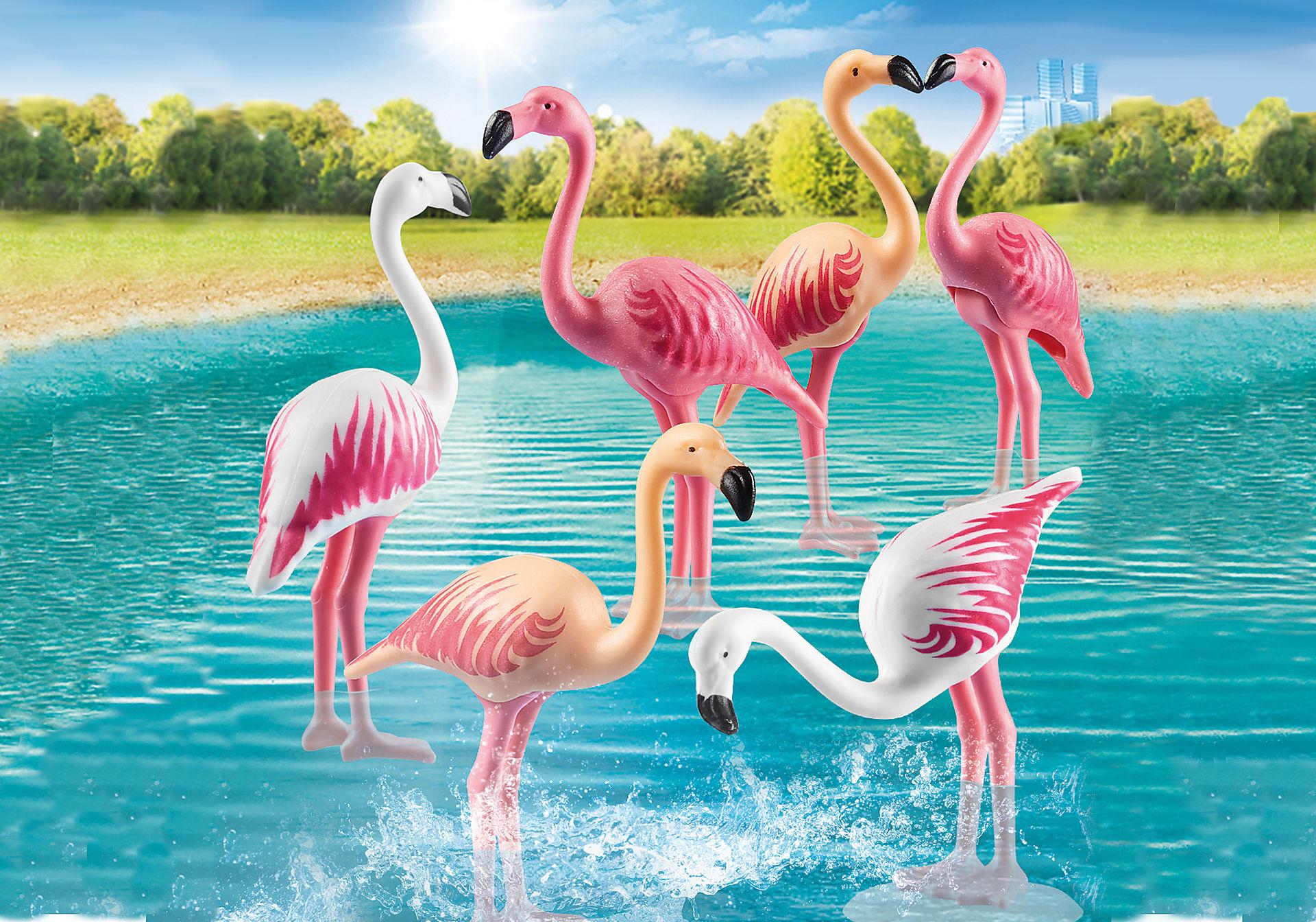 70351 Zwerm flamingo's zoom image1