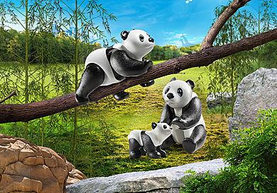 70353 Två pandor med unge