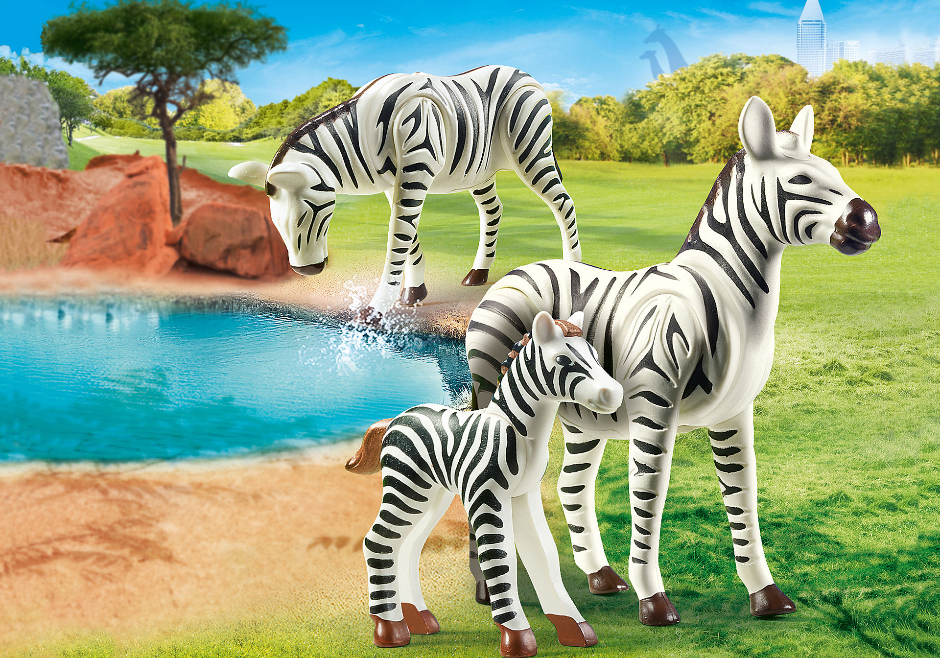 70356 Couple de zèbres avec bébé zoom image1
