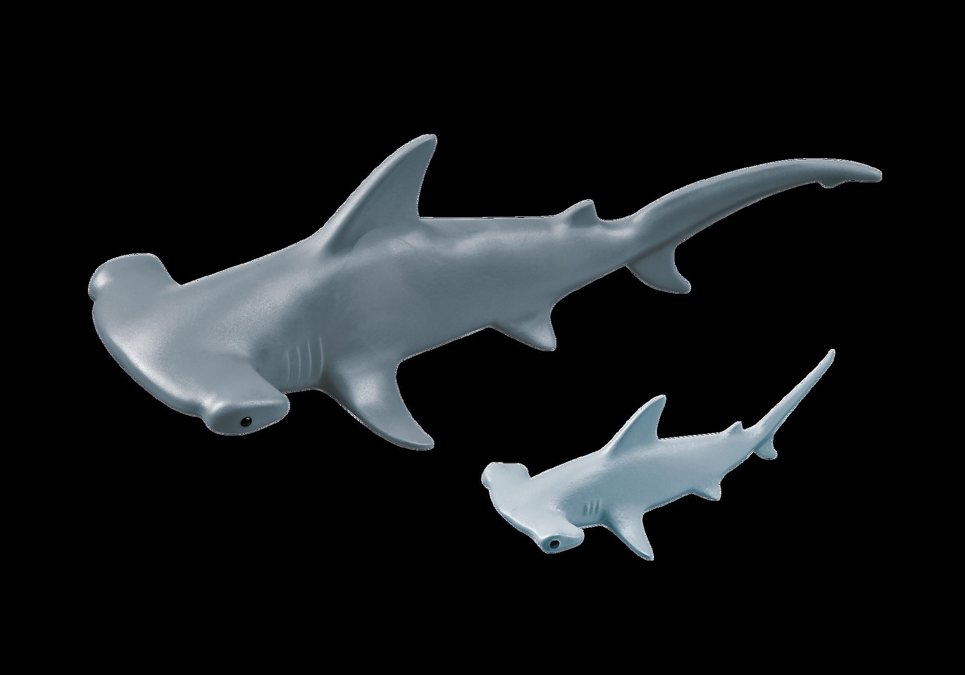 9065 Requin-marteau et son petit zoom image4