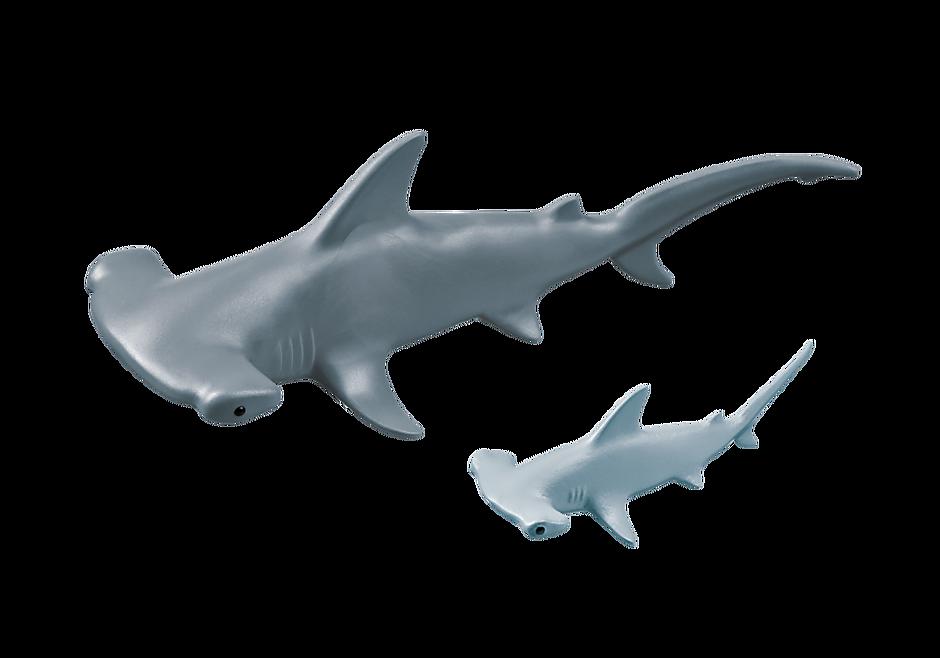 9065 Requin-marteau et son petit detail image 4