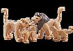 9834 Famiglia di leoni
