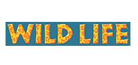 Vehículo Safari con Leones