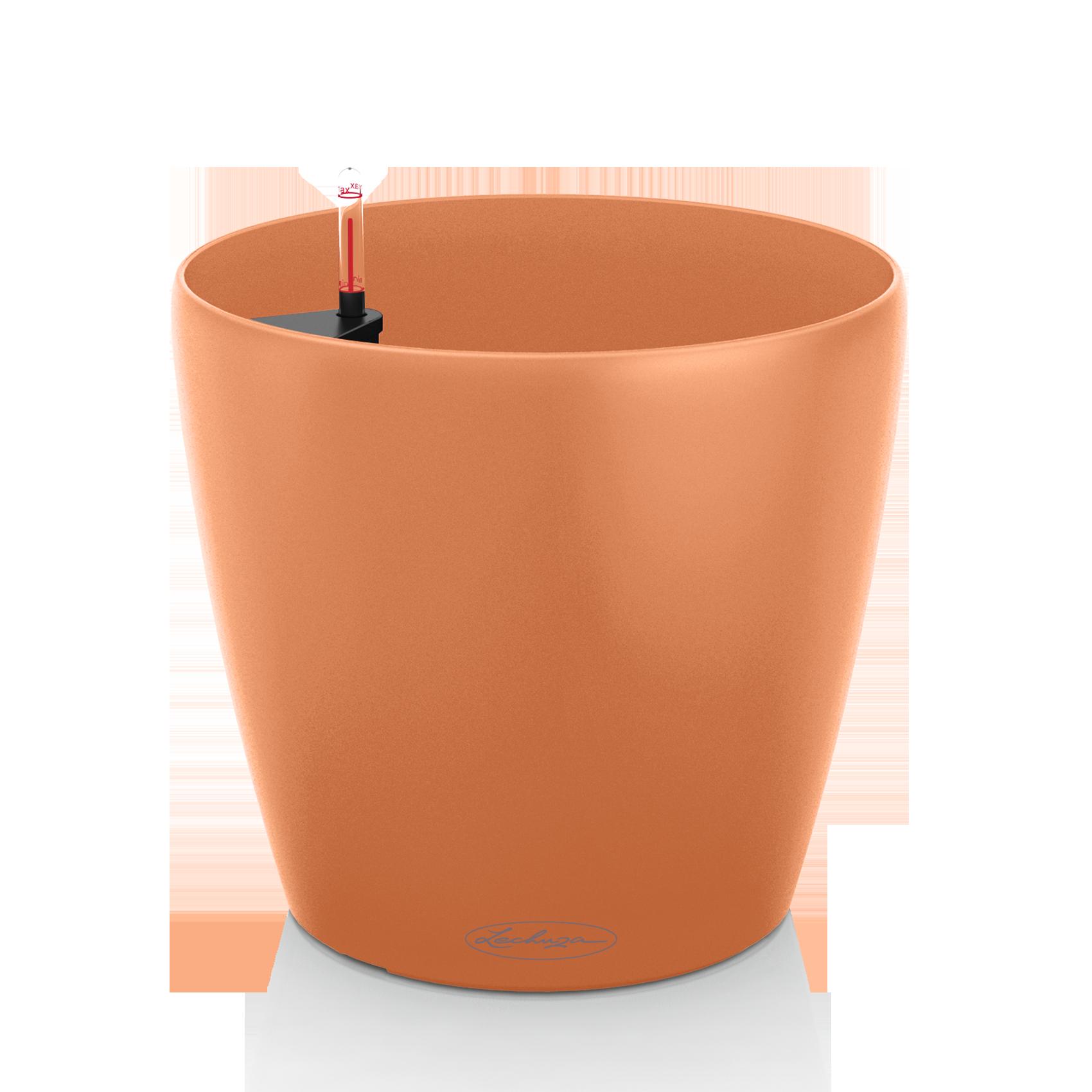 CLASSICO Color 18 mango slush