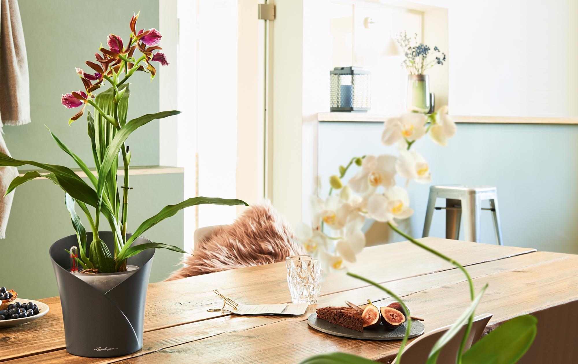 banner_orchideenpflege