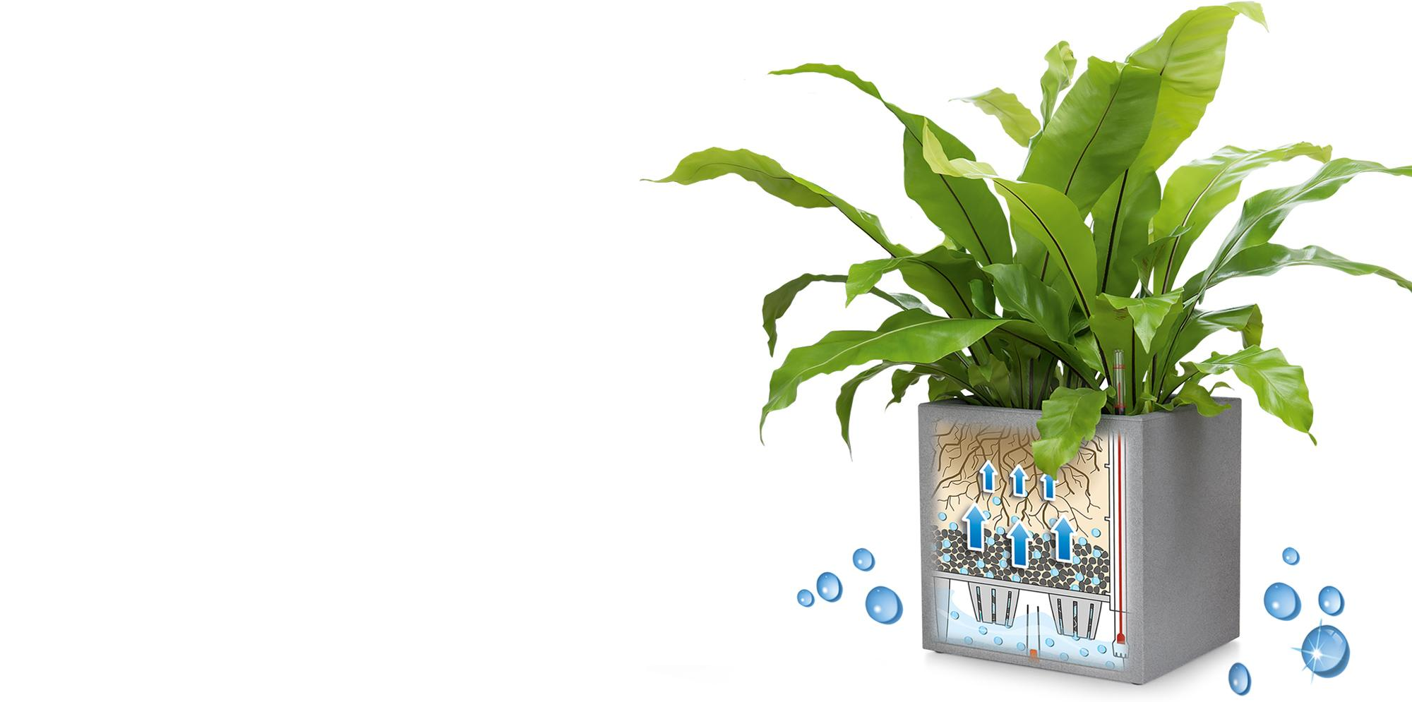 banner_sub_irrigation_system_canto