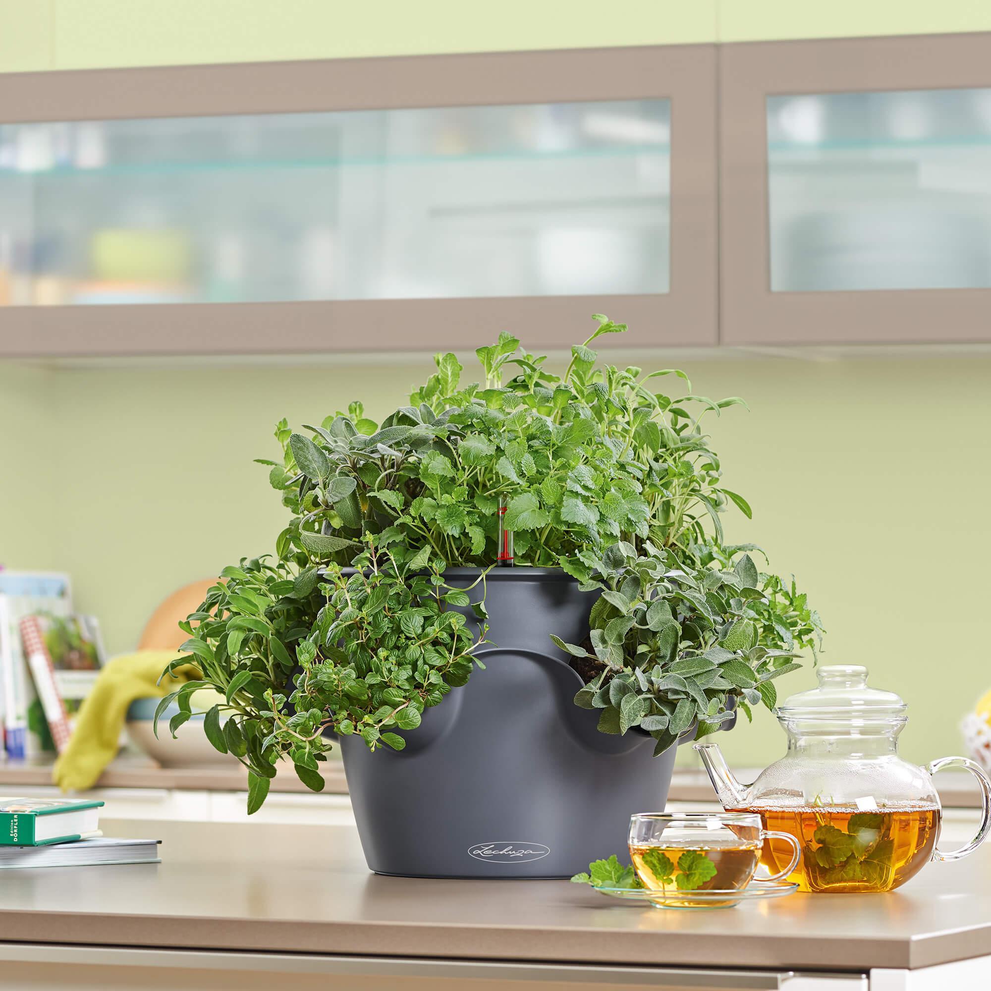 CASCADINO Color pistachio - Image 4