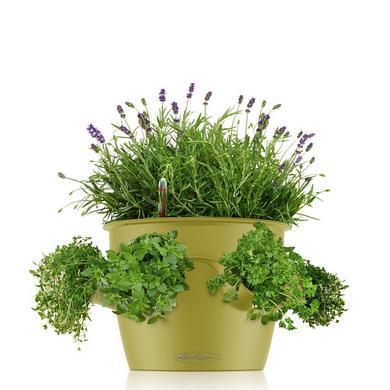 lechuza planter coupon