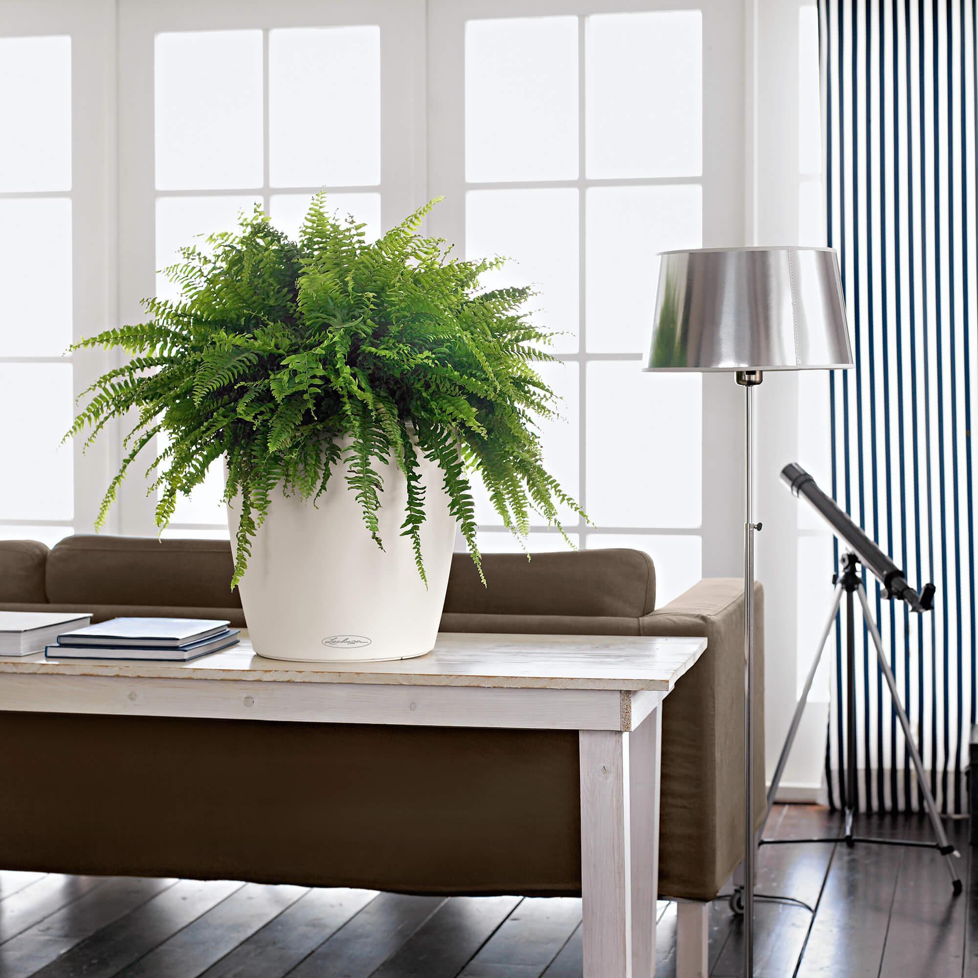 CLASSICO Color 35 white - Image 4