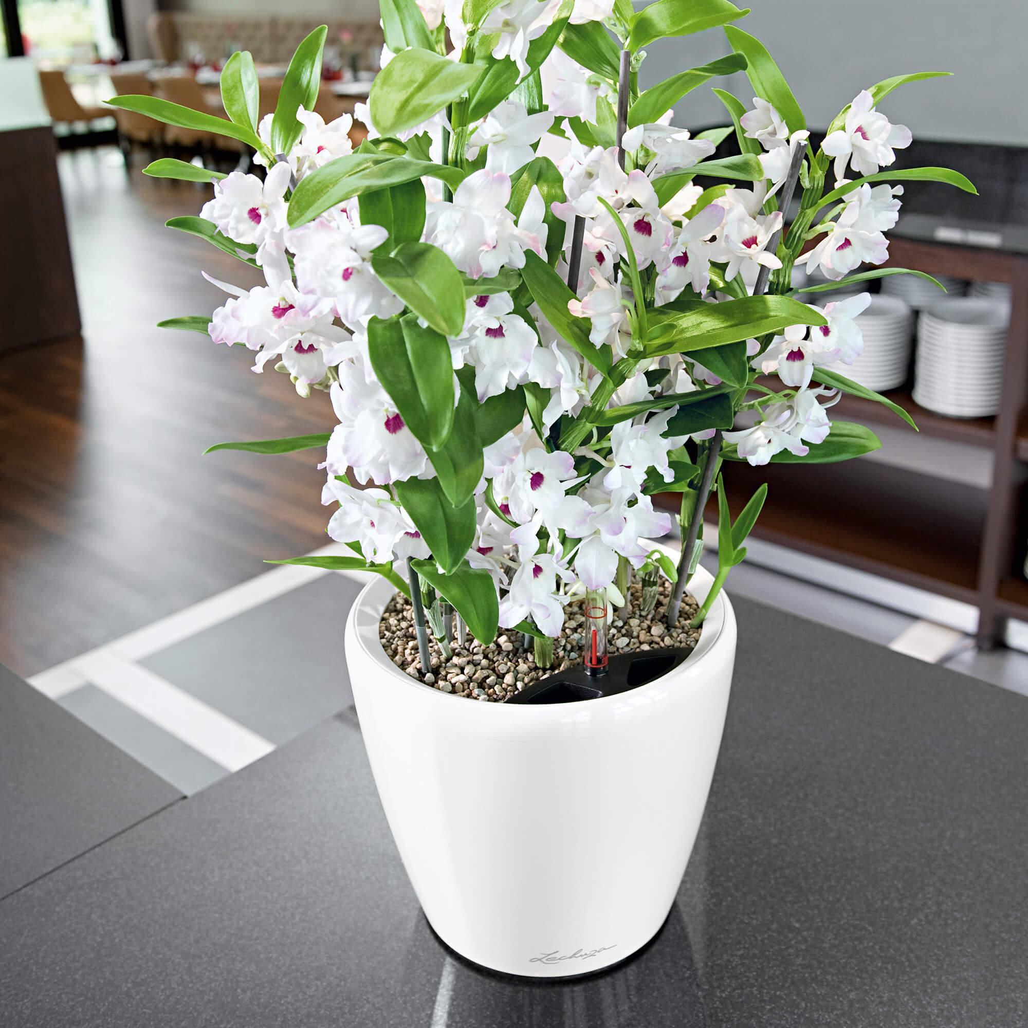 CLASSICO LS 21 white high-gloss - Image 4