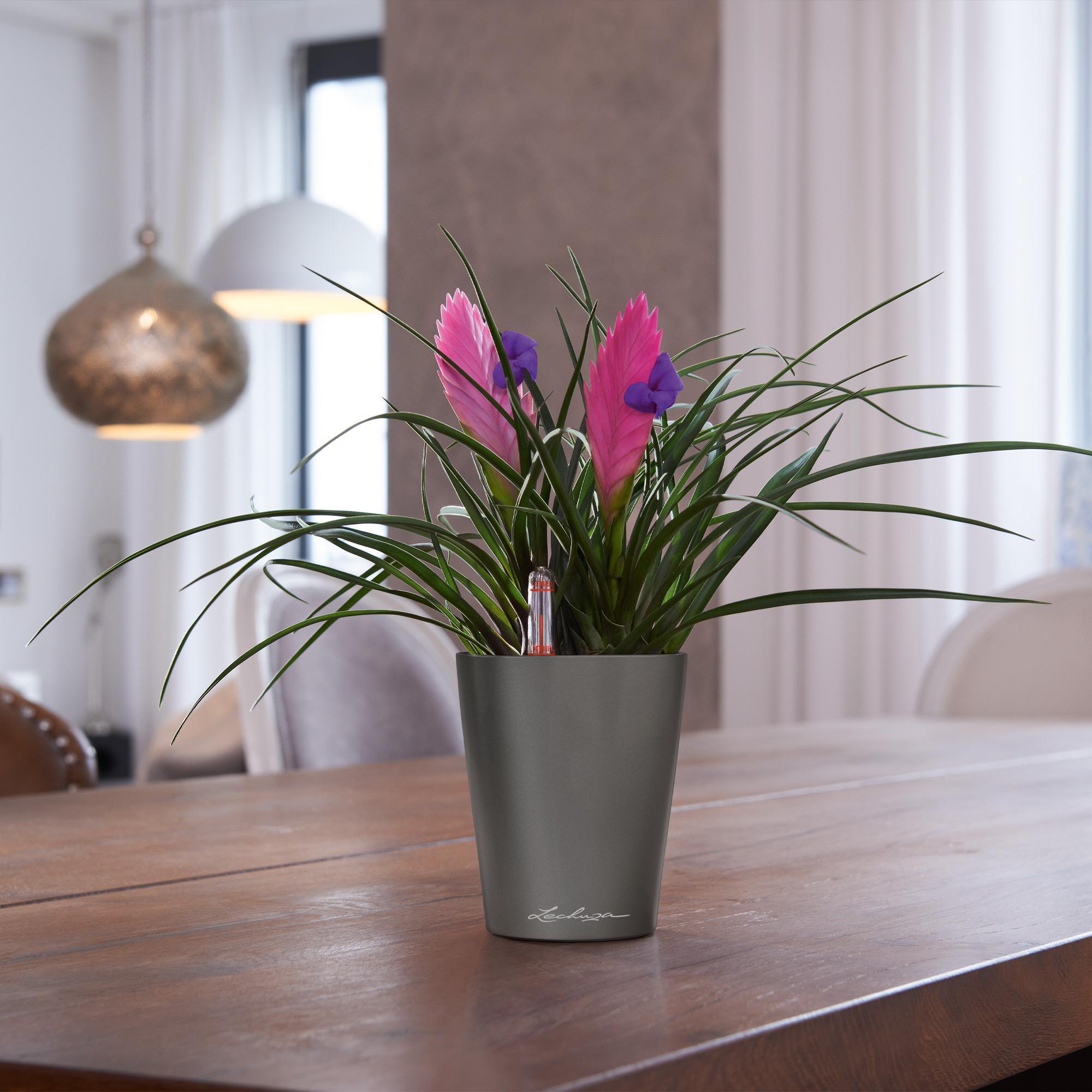 MINI-DELTINI pastel violet high-gloss - Image 6