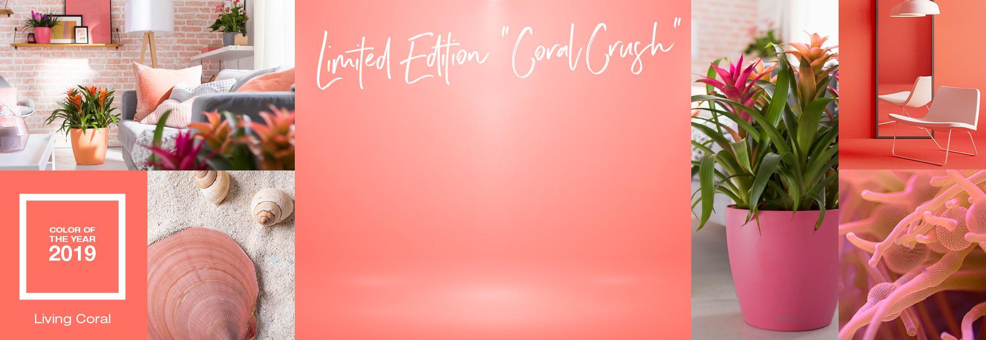 hero_banner_coral-crush