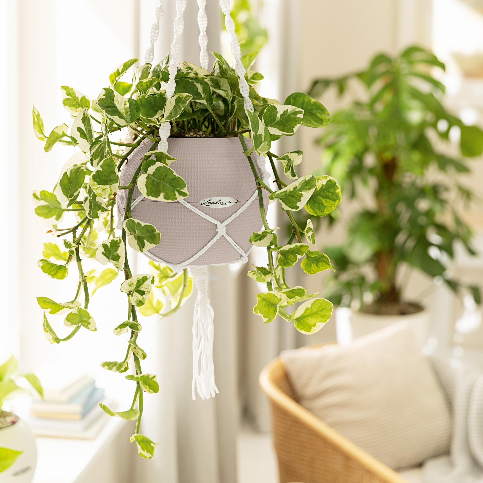 LECHUZA-PURO Color 20 blanc - Image 7