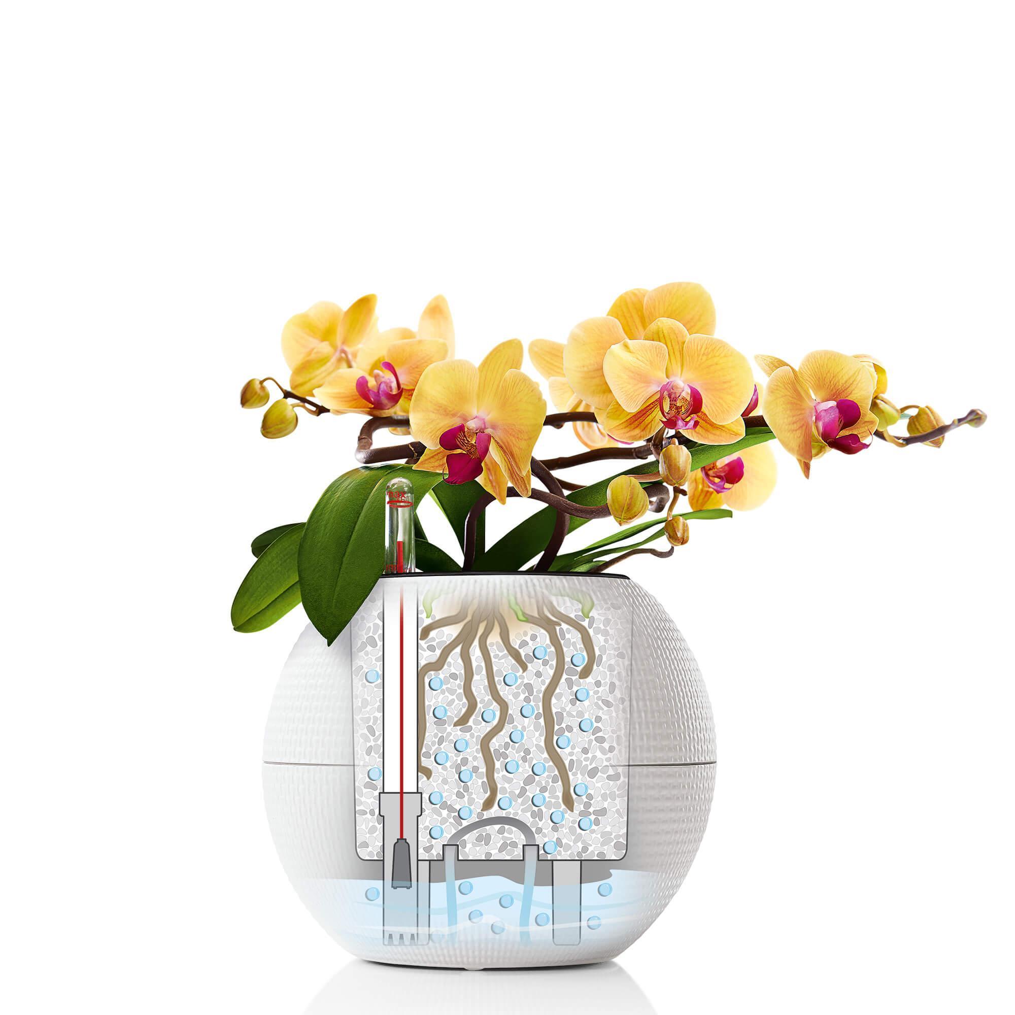 LECHUZA-PURO Color 20 blanc - Image 10