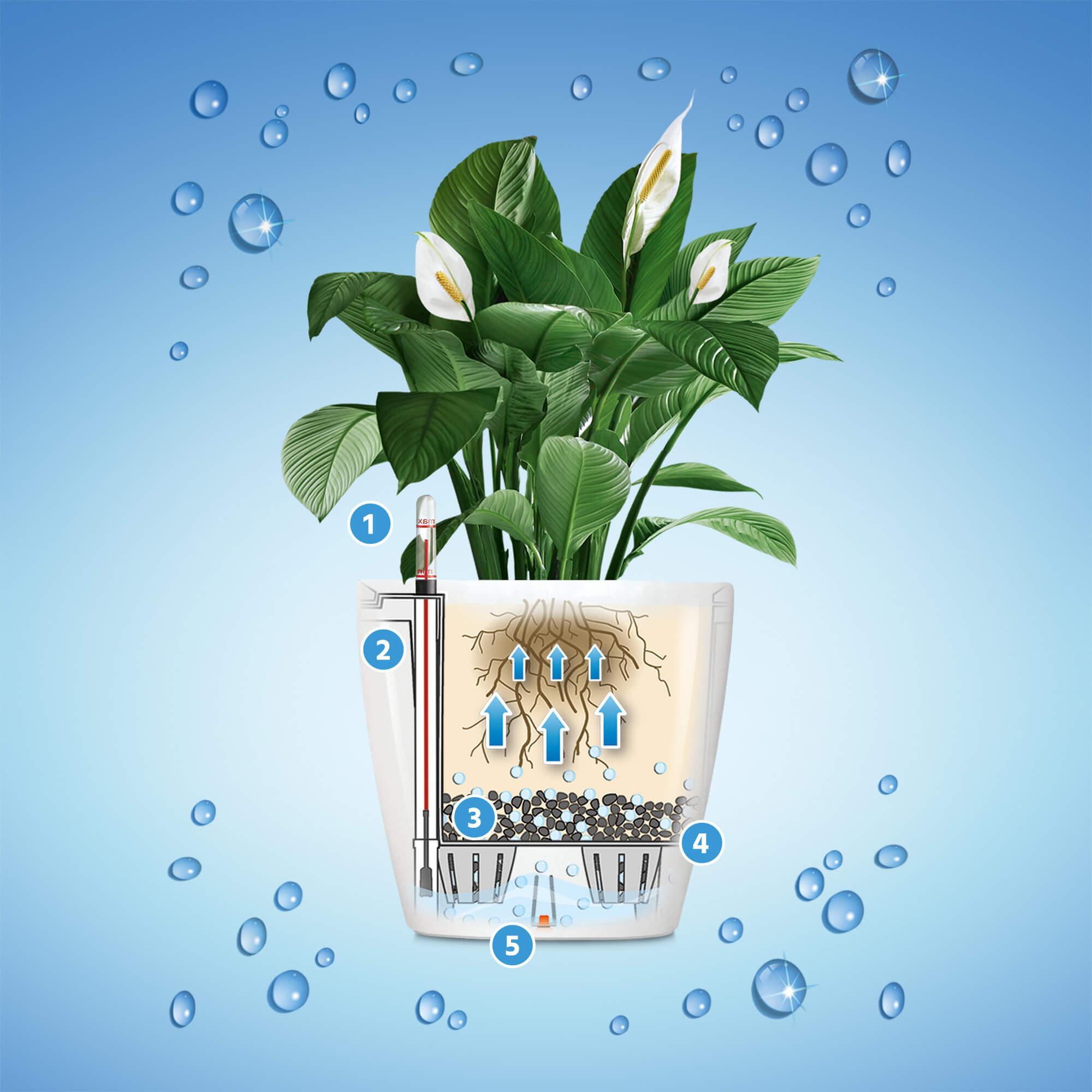 le_sub-irrigation-system