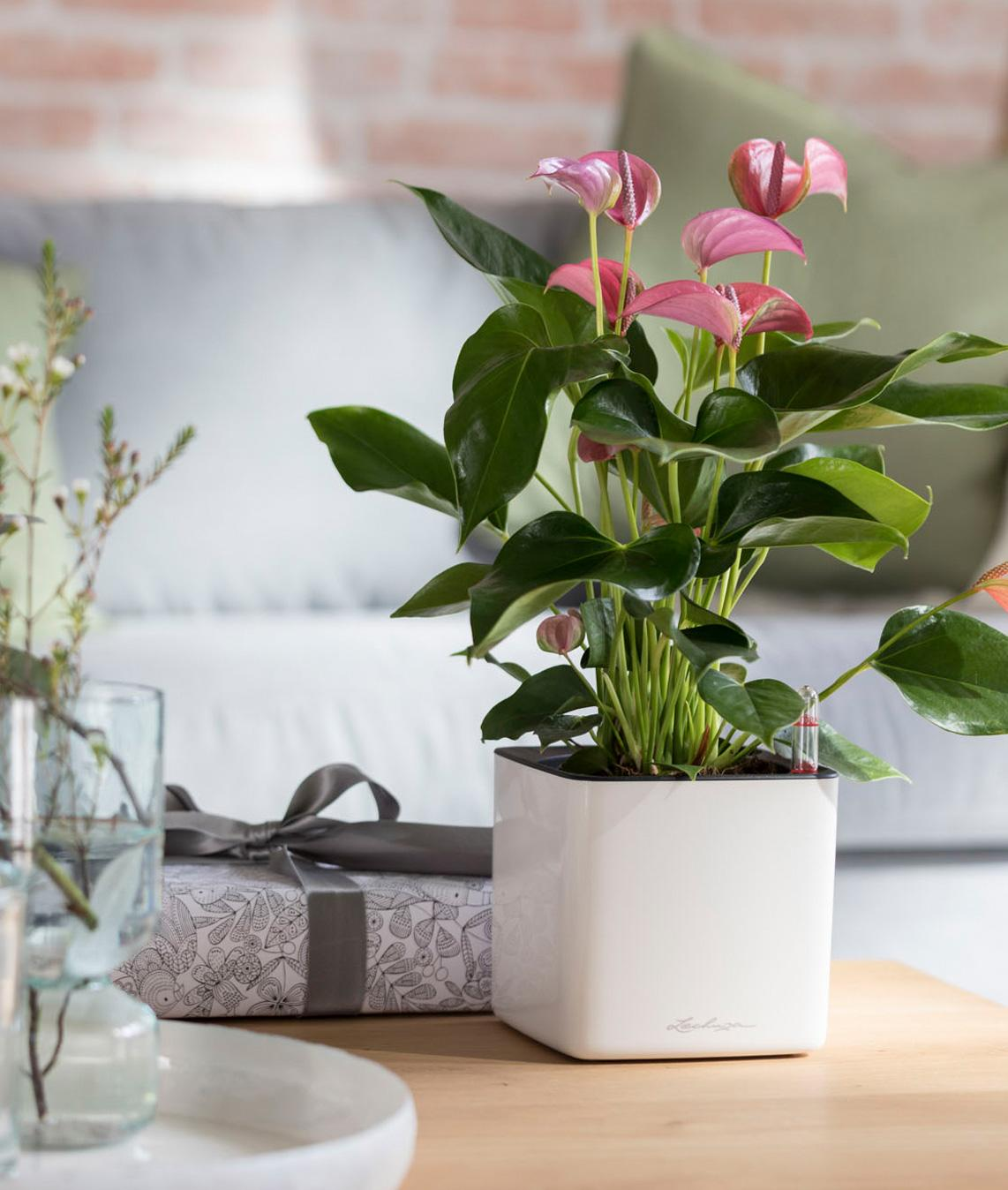 le_tw-gift-ideas_cube_glossy_w