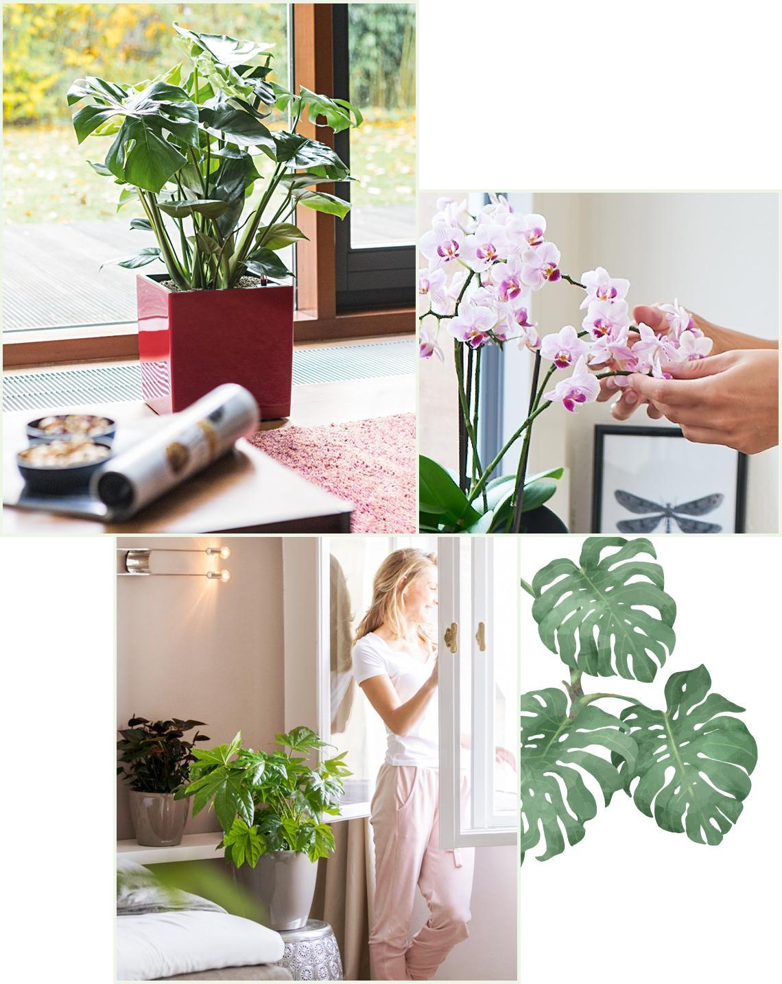 le_tw-indoorplants_abstauben_1