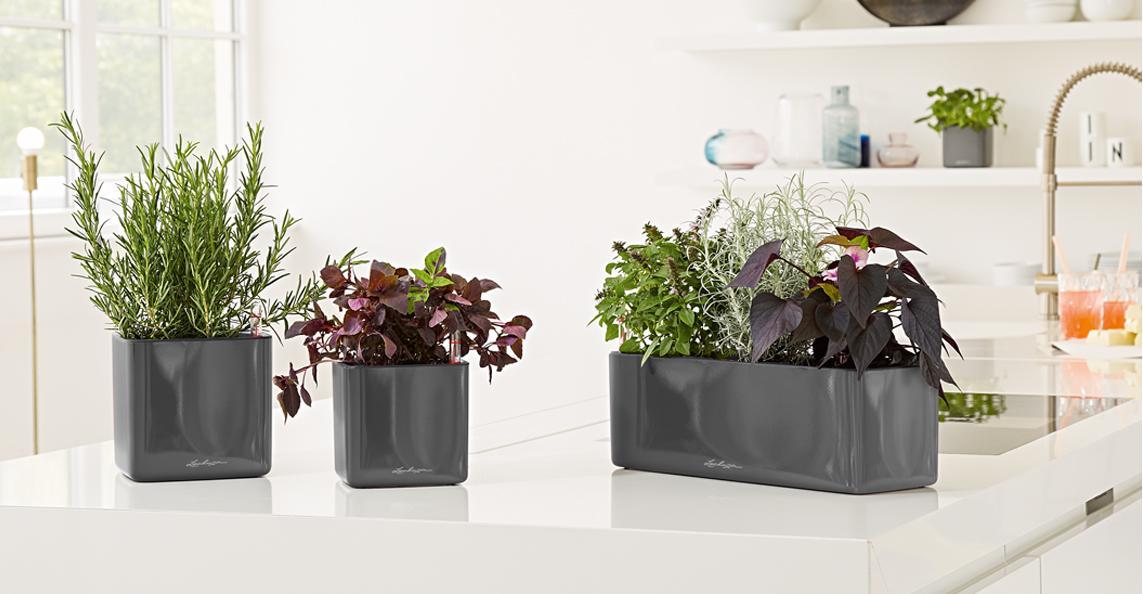 le_tw-indoorplants_abstauben_glossy