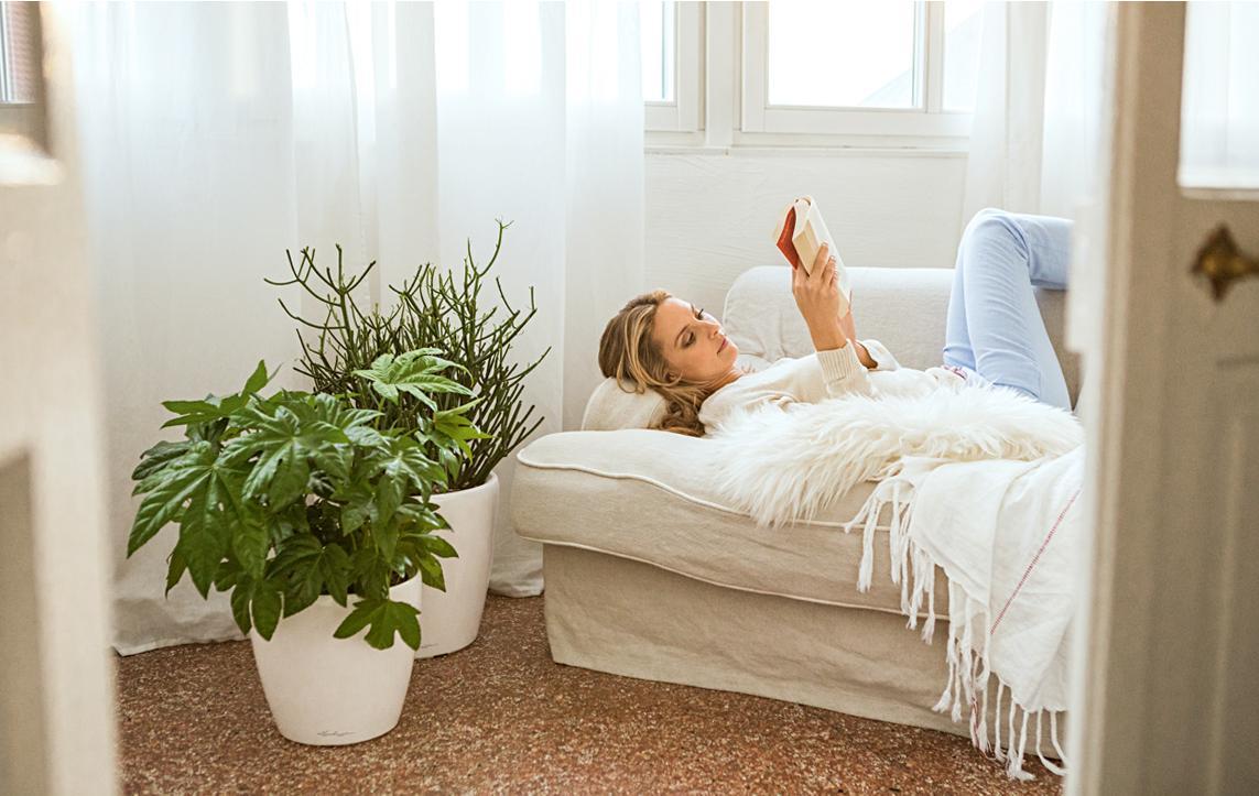 le_tw-indoorplants_pflegetipps_classico