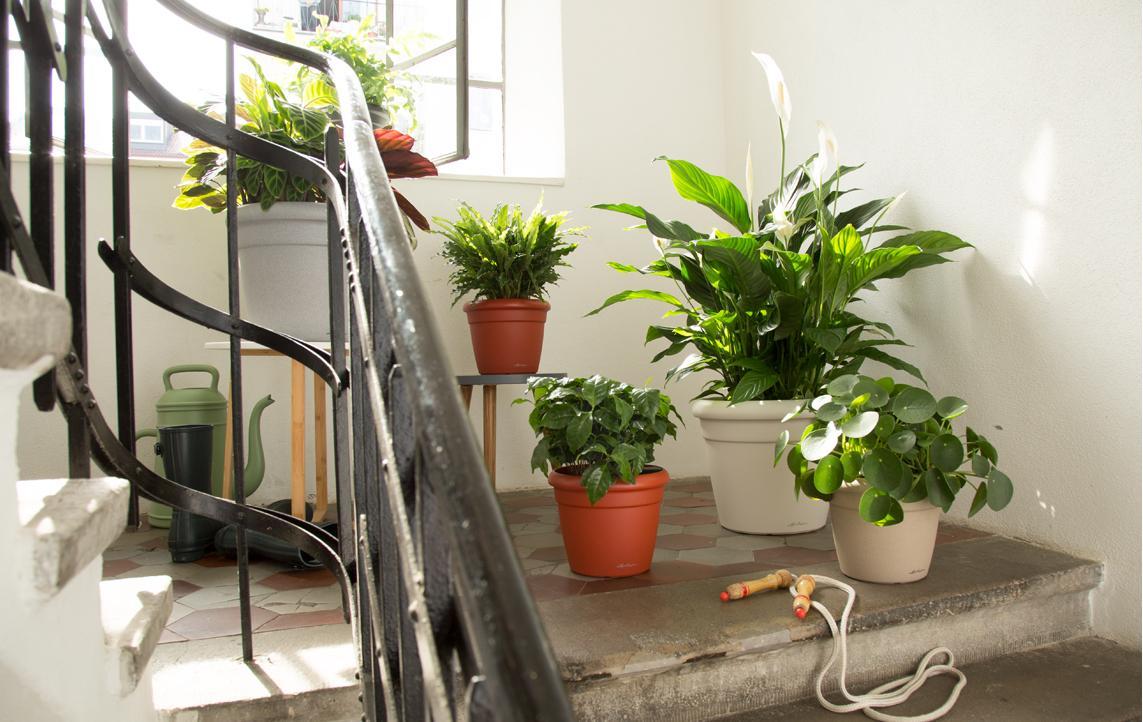 Kracht Planten Huis : Voorjaarskuur voor uw kamerplanten