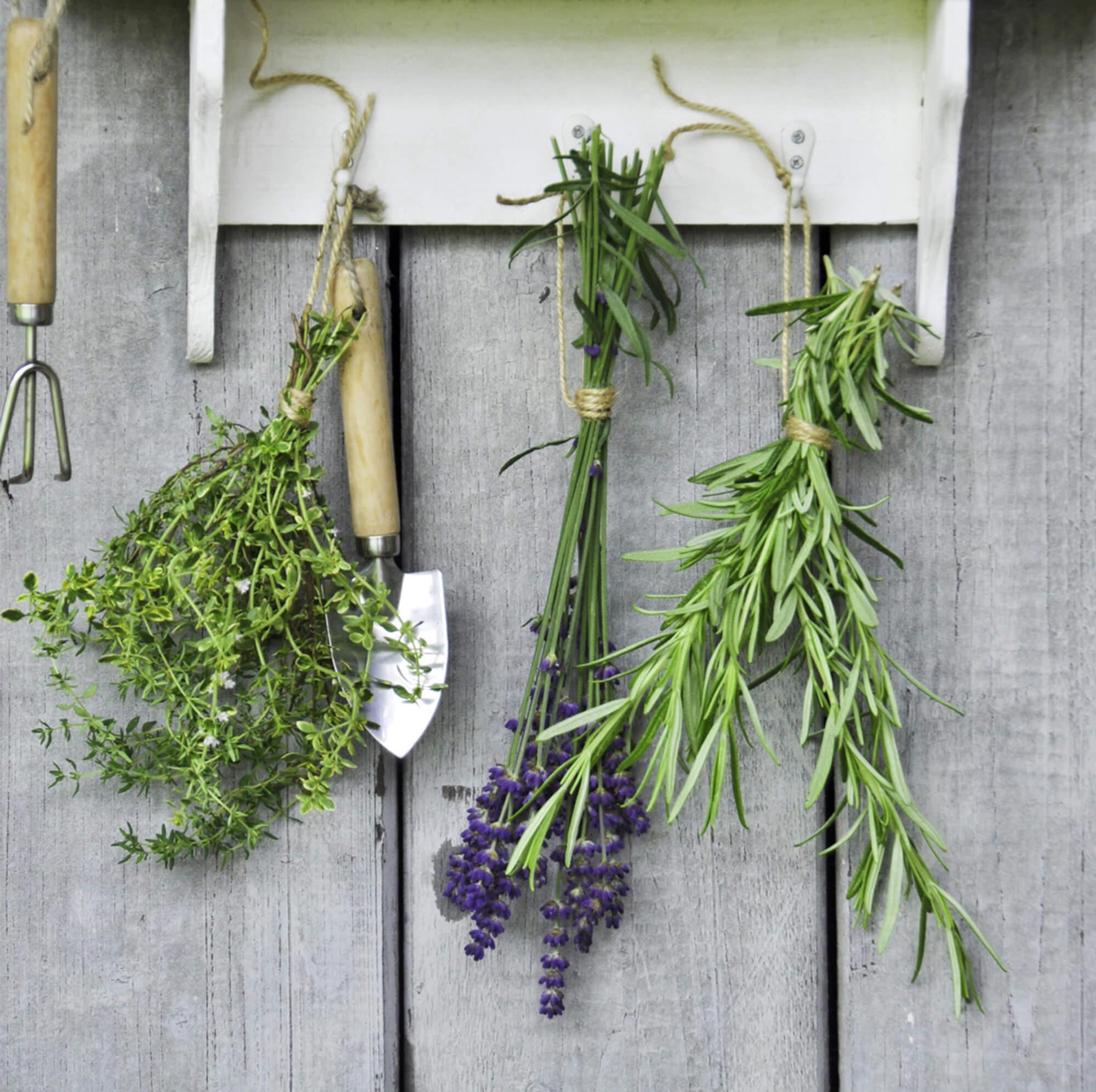 Las hierbas aromáticas se pueden secar