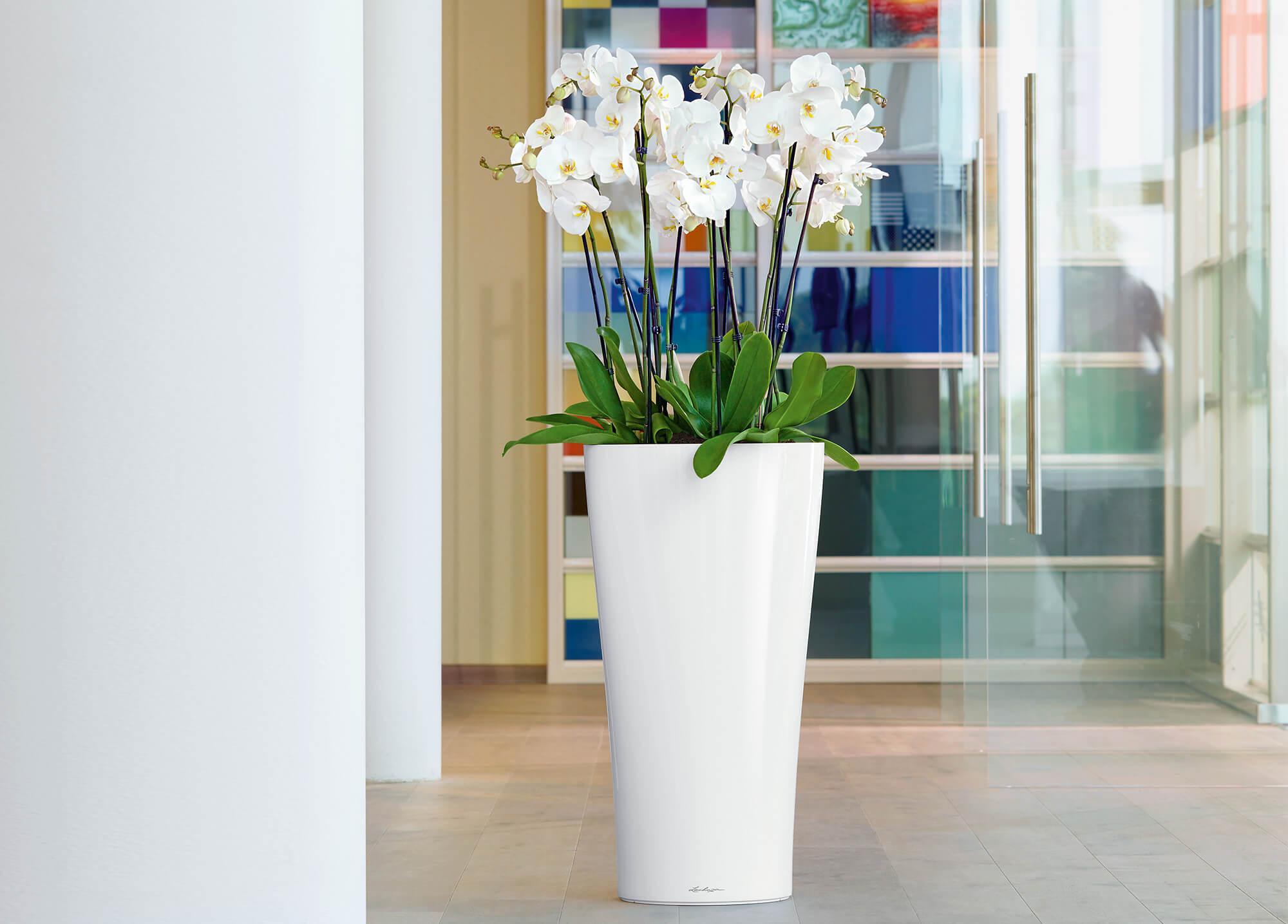 le_tw-orchideen_delta30_slider