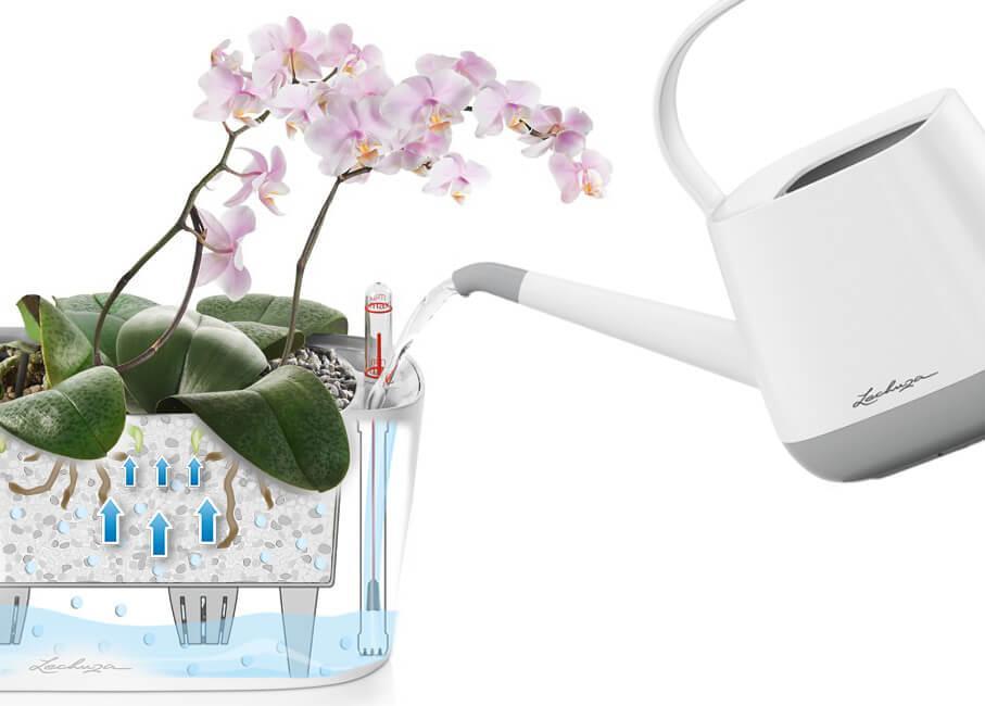 le_tw-orchideen_delta_bewaesser