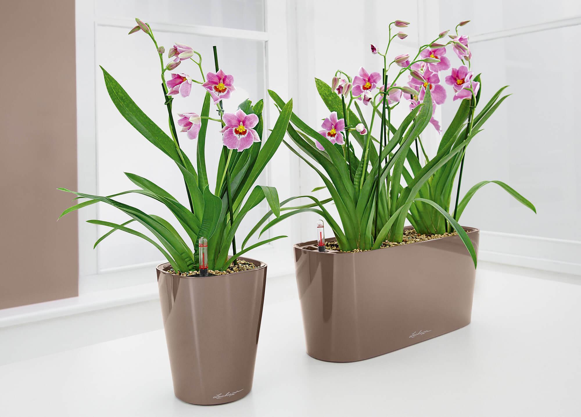 le_tw-orchideen_delta_deltini_slider