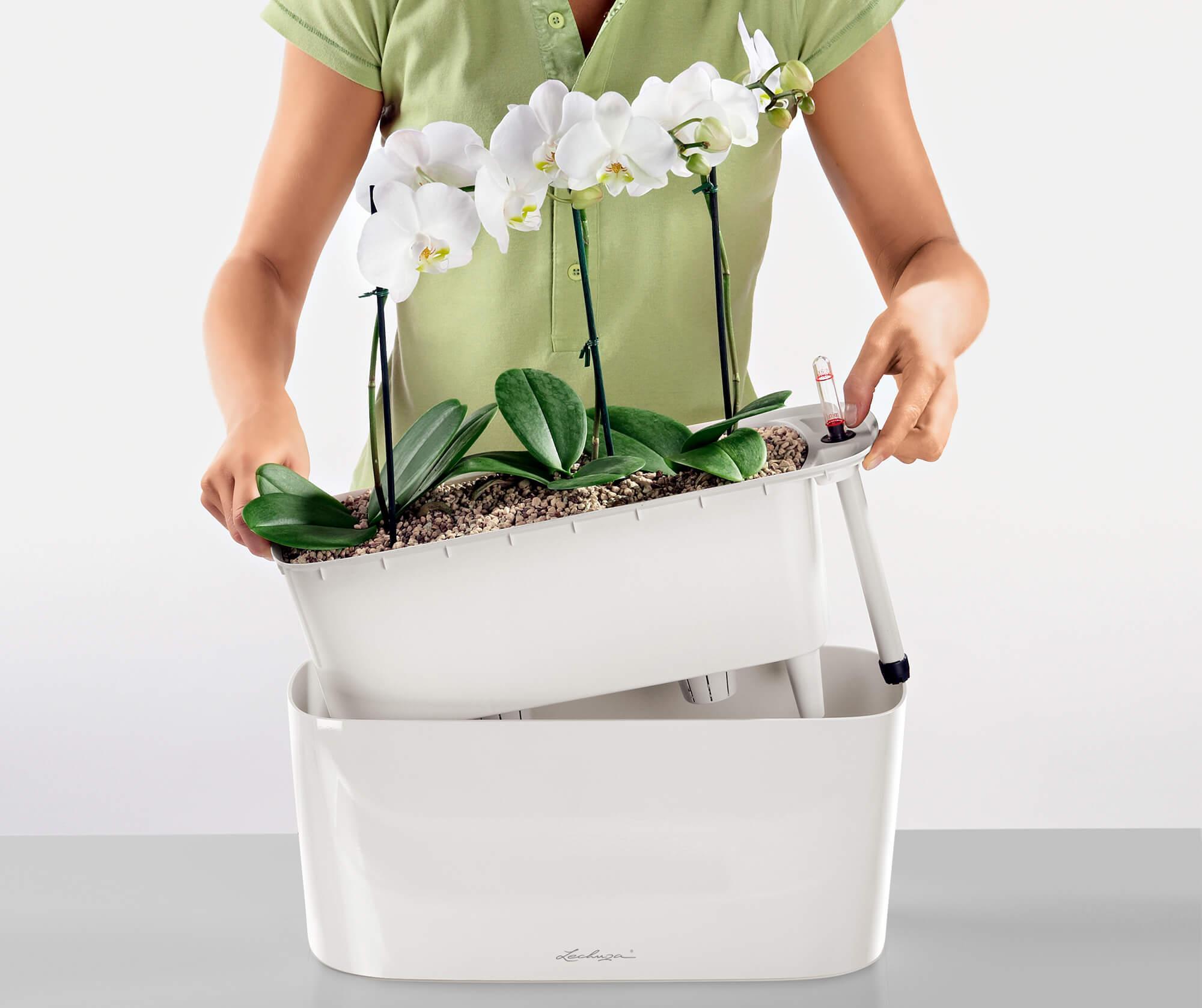 le_tw-orchideen_delta_pflanzeinsatz